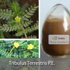 Tribulus Terrestris P.E.