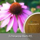 Echinacea Herb P.E