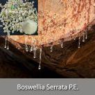 Boswellia Serrata P.E.